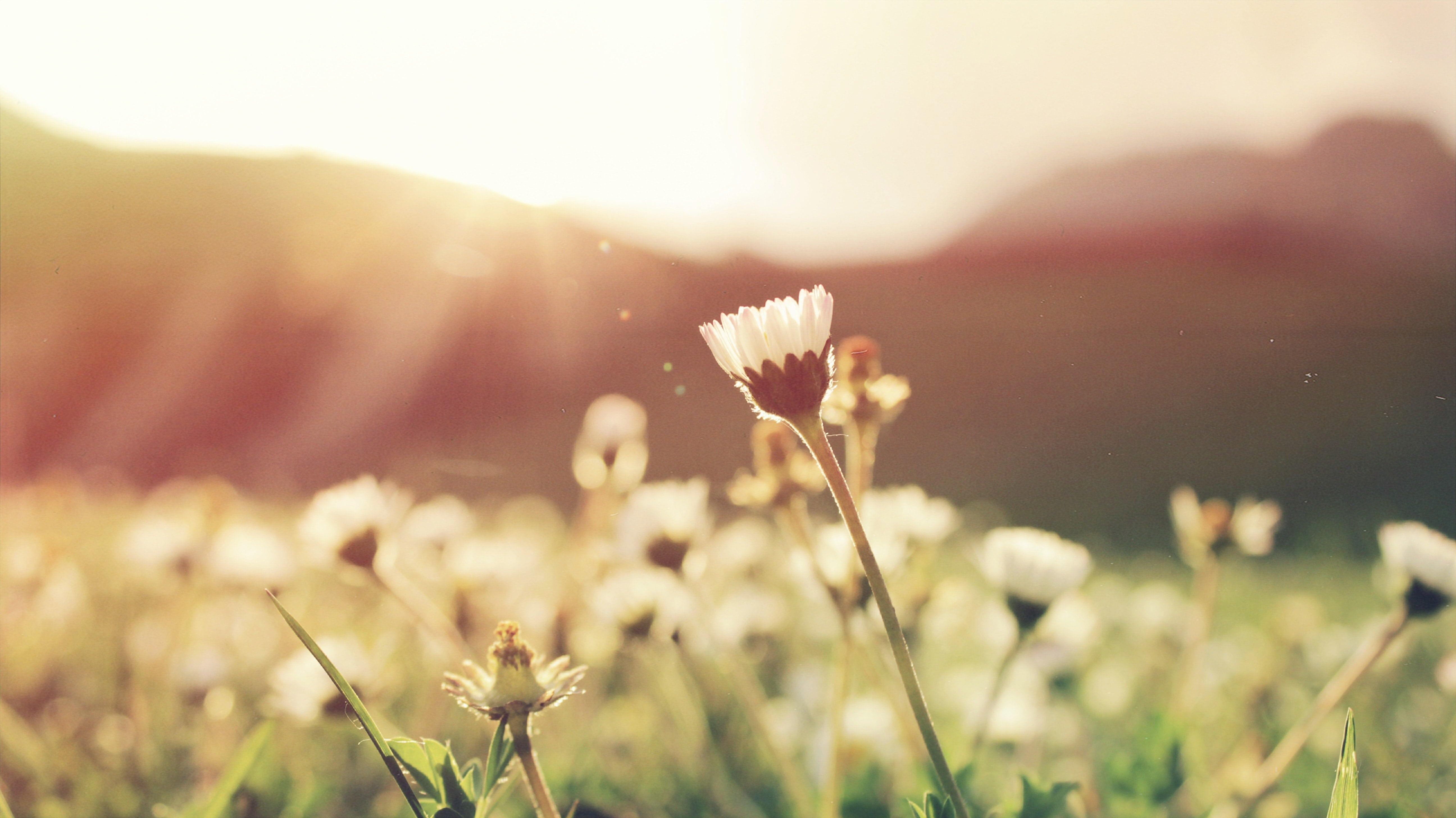 Meditation: Liebe verwandelt alles